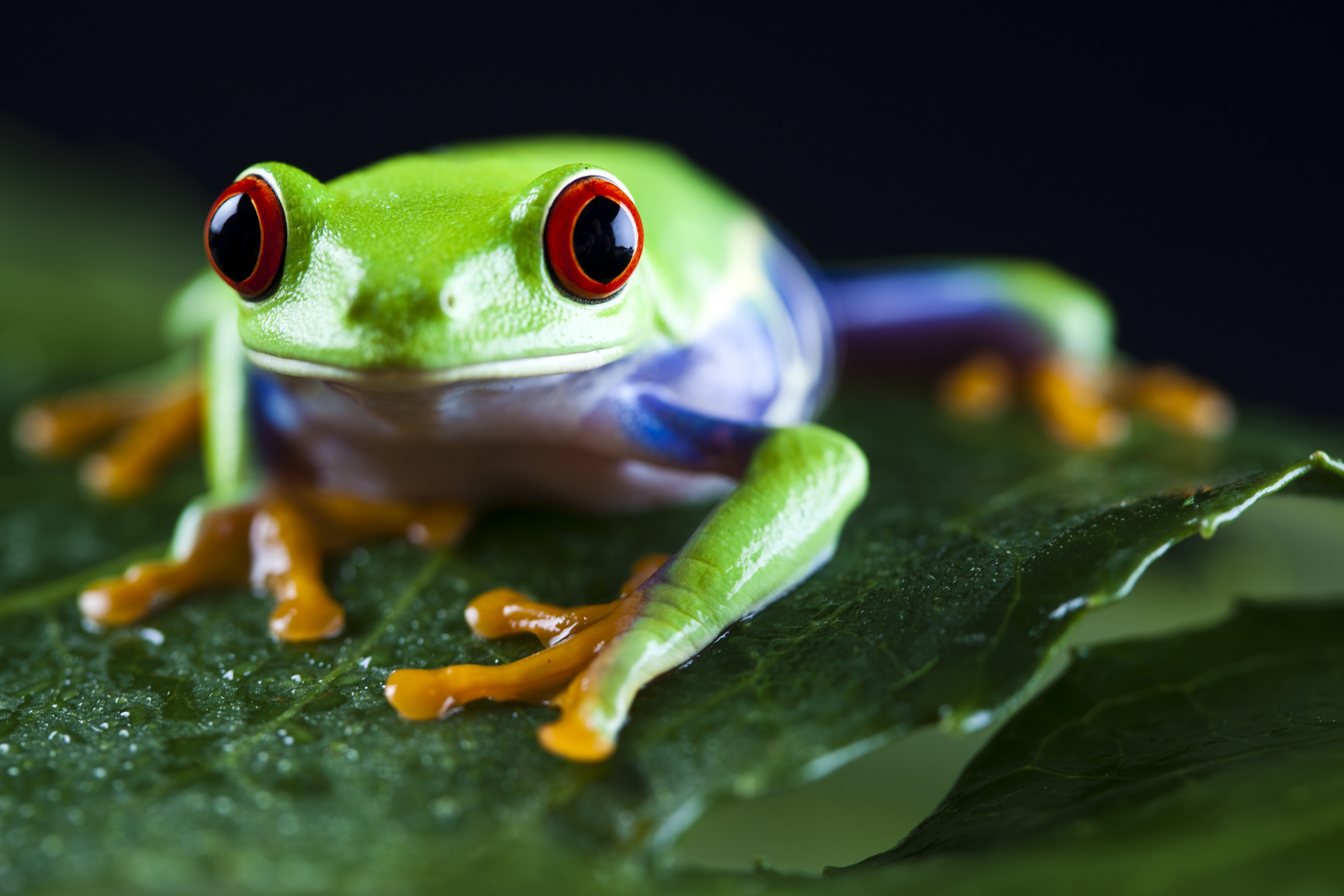 Photography Magazine | Nature Photography | Green Tree Frog